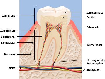 Blick in den Zahn